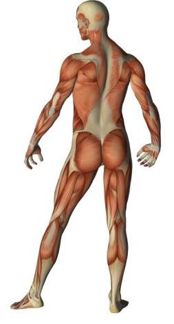 human-body_jpg_WEB